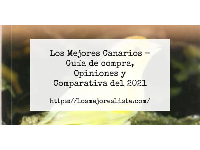 Los Mejores Canarios – Guía de compra, Opiniones y Comparativa del 2021 (España)