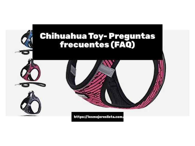 Los Mejores Chihuahua Toy – Guía de compra, Opiniones y Comparativa del 2021 (España)