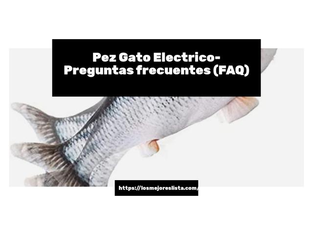 Los Mejores Pez Gato Electrico – Guía de compra, Opiniones y Comparativa del 2021 (España)