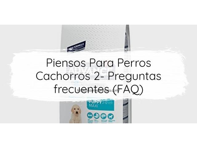 Los Mejores Piensos Para Perros Cachorros 2 – Guía de compra, Opiniones y Comparativa del 2021 (España)